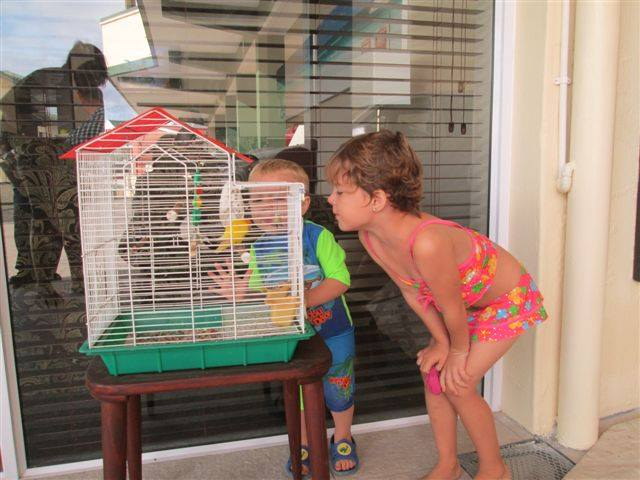 The kiddies visiting our little birdy, Perna
